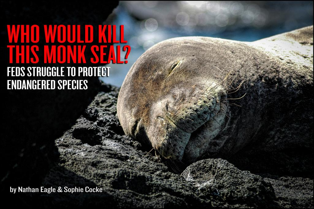 Who Would Kill This Monk Seal?