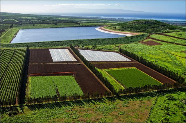 Aerial view of Molokai biotech fields, reservoir