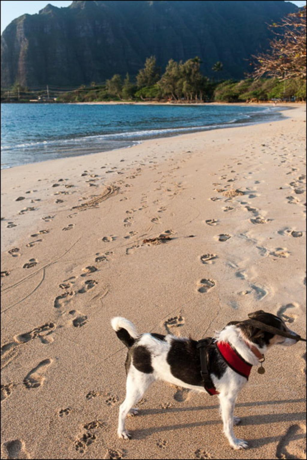 Hawaii Monitor: Leash Your Dogs, Please.