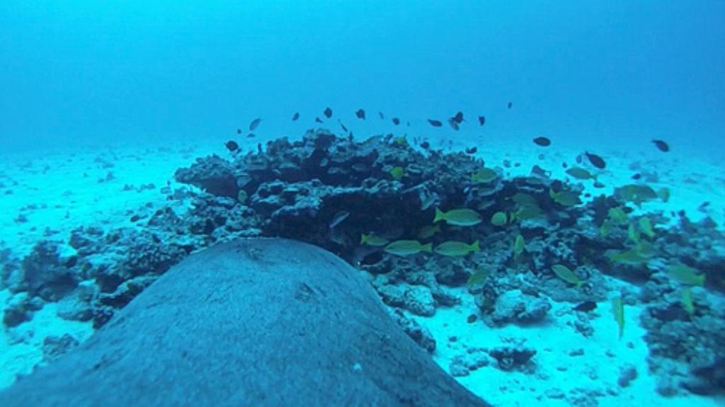 Can Spy Cams Save Hawaiian Monk Seals?