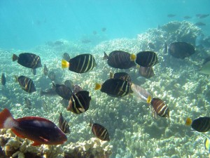 Saving Coral Reefs — and Which Ones — Subject of New Study