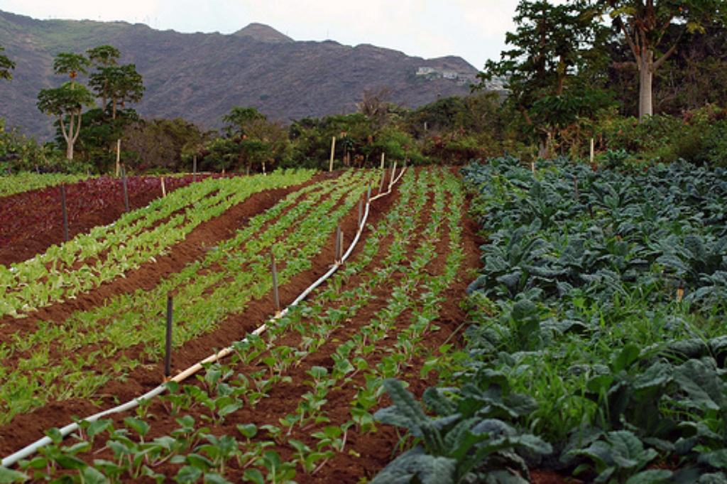 New Federal Food Safety Law Confuses Hawaii Farmers, State Officials