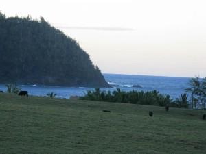 Aloha, Oprah! Big Wind Developer May Be Celeb's New Maui Neighbor