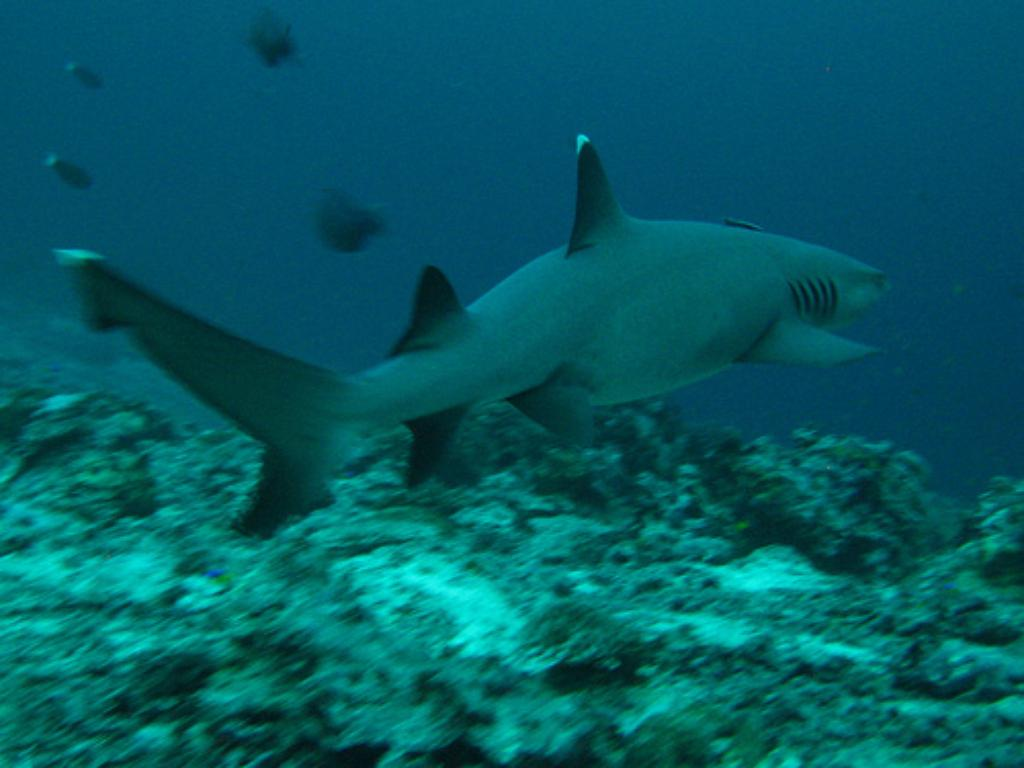 Fishery Council: 'Sharks Don't Spend Any Money'