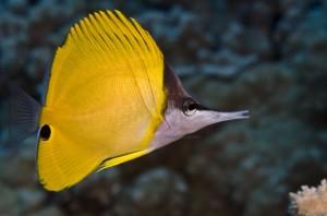 Thousands Testify on Bills to Restrict Aquarium Fishing in Hawaii