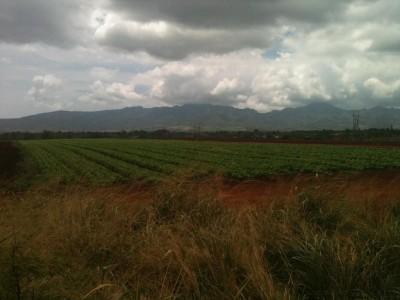 Supreme Court Affirms 3,500-Home Development On Farmland