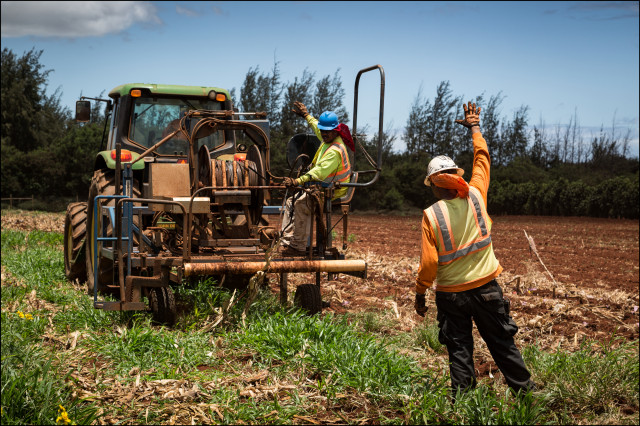 EMBARGOED FOR MOLOKAI 7.14.14 Molokai Mycogen utility workers lay irrigation lines in field on July 2, 2014.