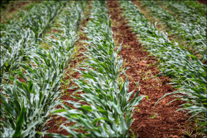Fierce Opposition By Ag Industry Kills Pesticide Disclosure
