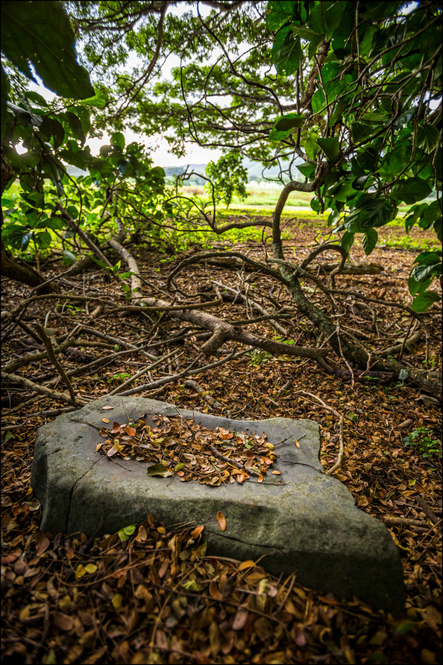 Kawainui Marsh Kailua Grinding Stone