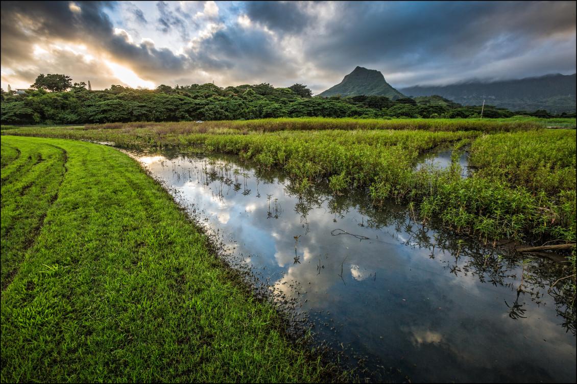 Kawainui Marsh in Kailua