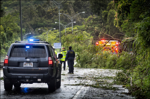 Police and firefighters prepare to cut and remove fallen tree on Pali Highway after high winds from Tropical Storm Islelle hit the windward side of Oahu