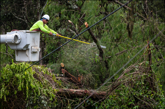 Ultility crew cuts tree to free fallen power lines in the Nanawale Estates section of Puna on August 12, 2014