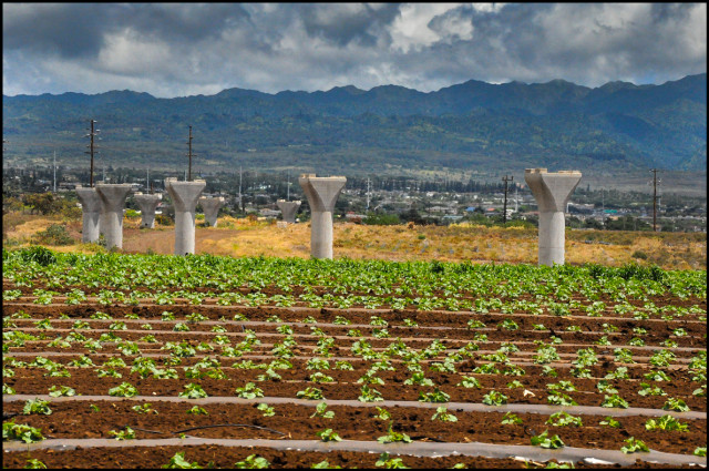 Rail columns over farmland in West Oahu signal that the area will become a 11,750-home community known as Hoopili.