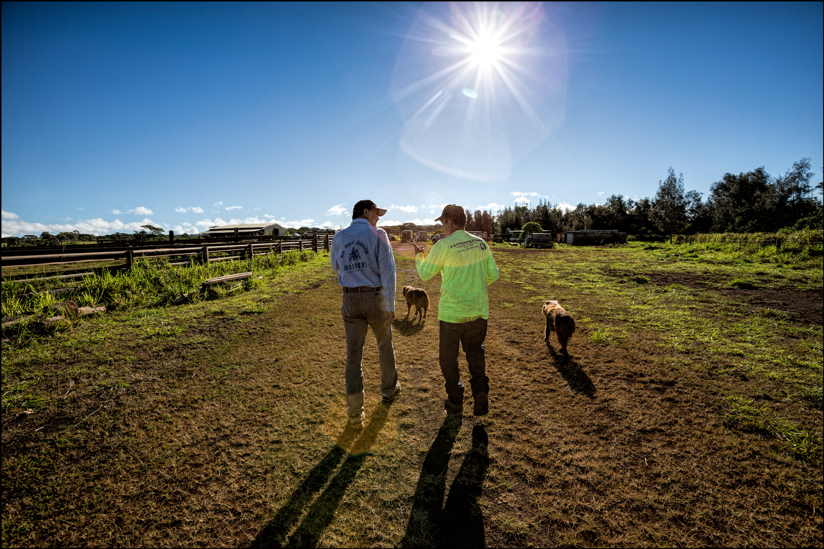 Sen. Clayton Hee, a weekend paniolo, and ranch owner Ron DeReis, right, take a morning walk before the bull roundup. DeReis owns the Maukele Ranch in central Oahu.