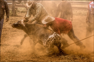 Weekend Paniolos: The Cowboy Life Is Disappearing in Hawaii