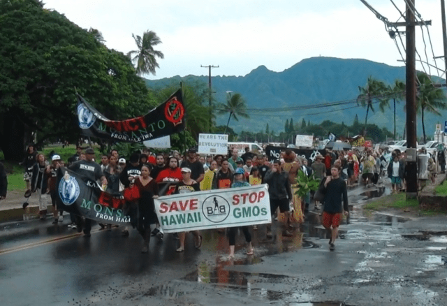 Anti-GMO protest on Oahu