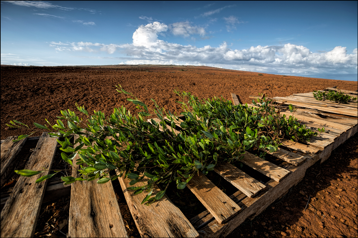 In the Kaneloa area plateau of Kahoolawe, hardpan is the norm. Here looking towards Maui old pallets are being used to try and get rain water to collect and grow plants to eventually cover the land. 9.29.14