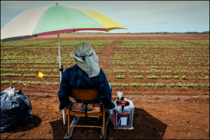 Managing Pesticide Drift: Farmers Get It