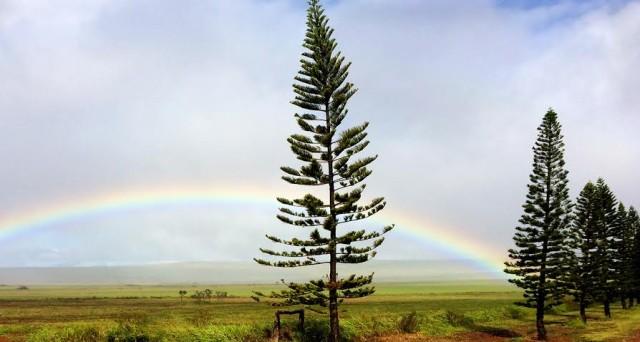 Lanai rainbow