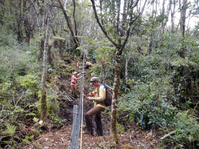 Waikamoi fence Easst Maui watershed