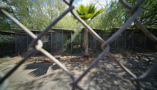 Animal Quarantine kennels .15 may 2015. photograph Cory Lum/Civil Beat