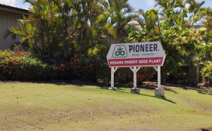 Hawaii Seed Crops Worth $151M