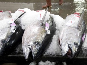 Wespac Seeks to Expand Bigeye Tuna Quotas for U.S. Fleets