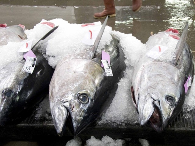 Hawaii's tuna fleet is monitored by fisheries observers to ensure fishermen are following the rules on the open seas.