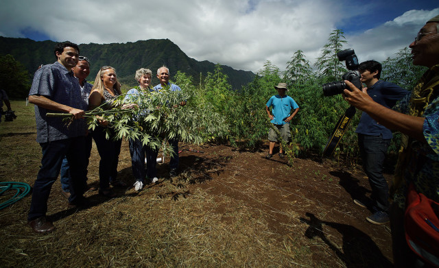L-R, Rep Chris Lee, Rep Marcus Oshiro, Rep Lynn DeCoite, Rep Cynthia Thielen and Right, Sen Mike Gabbard pose while holding an Industrial Hemp plant at the University of Hawaii, Waimanalo Research Station. 23 july 2015. photograph Cory Lum/Civil Beat