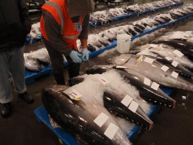 Hawaii bigeye tuna