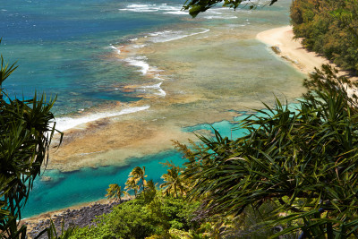 Holy Mackerel, With No Tourists In Sight The Fish Are Returning To Kauai's North Shore