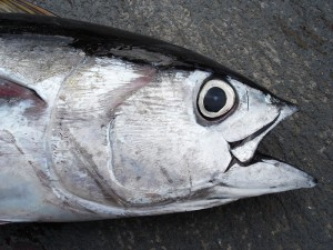 Council Laments Fishery's Early Closure