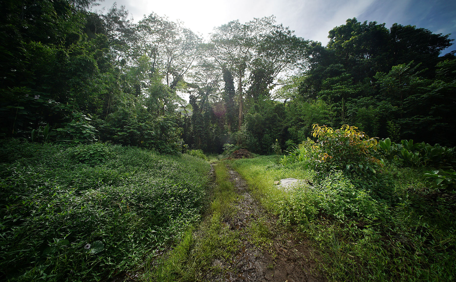 <p>Members of President Obama&#8217;s Advisory Commission on Asian Americans and Pacific Islanders visited the Ho'oulu 'Aina Nature Park in Kalihi Valley on Wednesday. The park sits on more than 100 acres of land that was spared from development.</p>