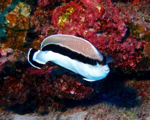 Emergency Moratorium on Collecting Aquarium Fish Demanded