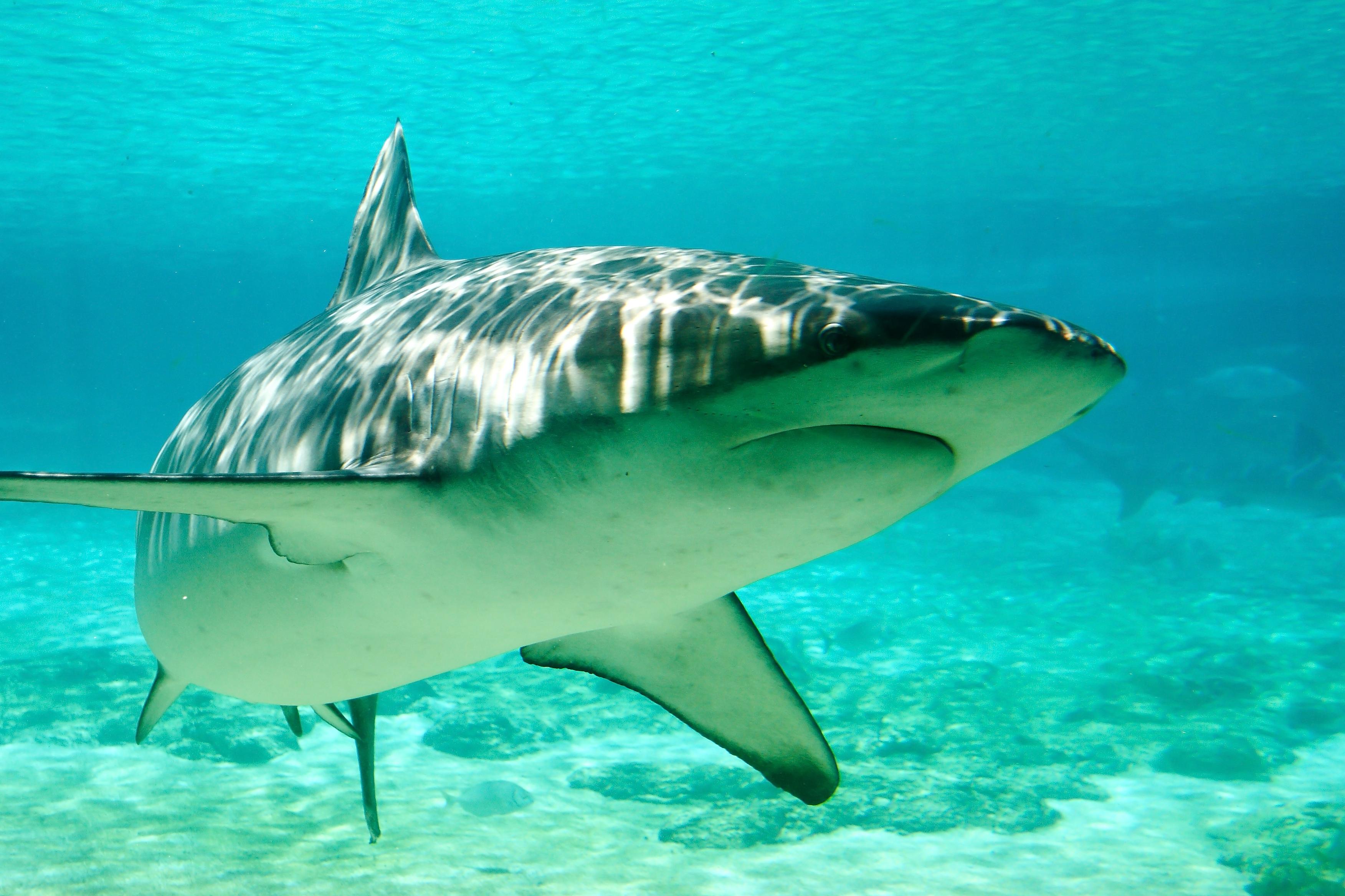 Hawaii Shark Attacks