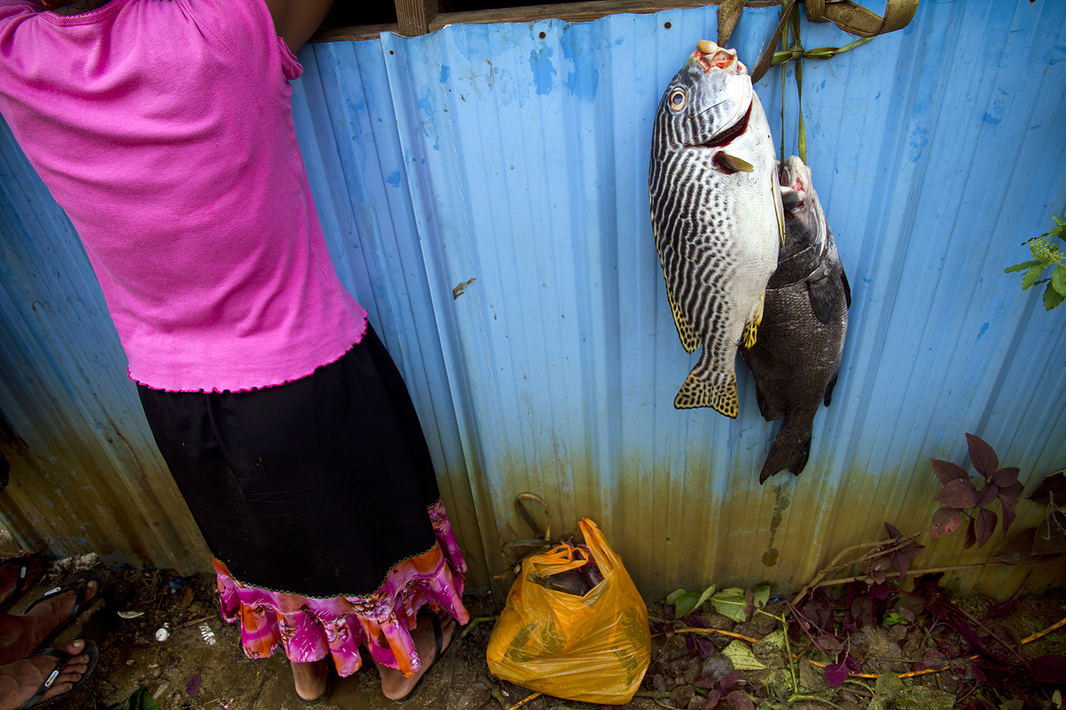 <p>A fresh catch on Pohnpei.</p>