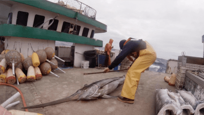 Harassment Of Fisheries Observers Has Doubled, Groups Say