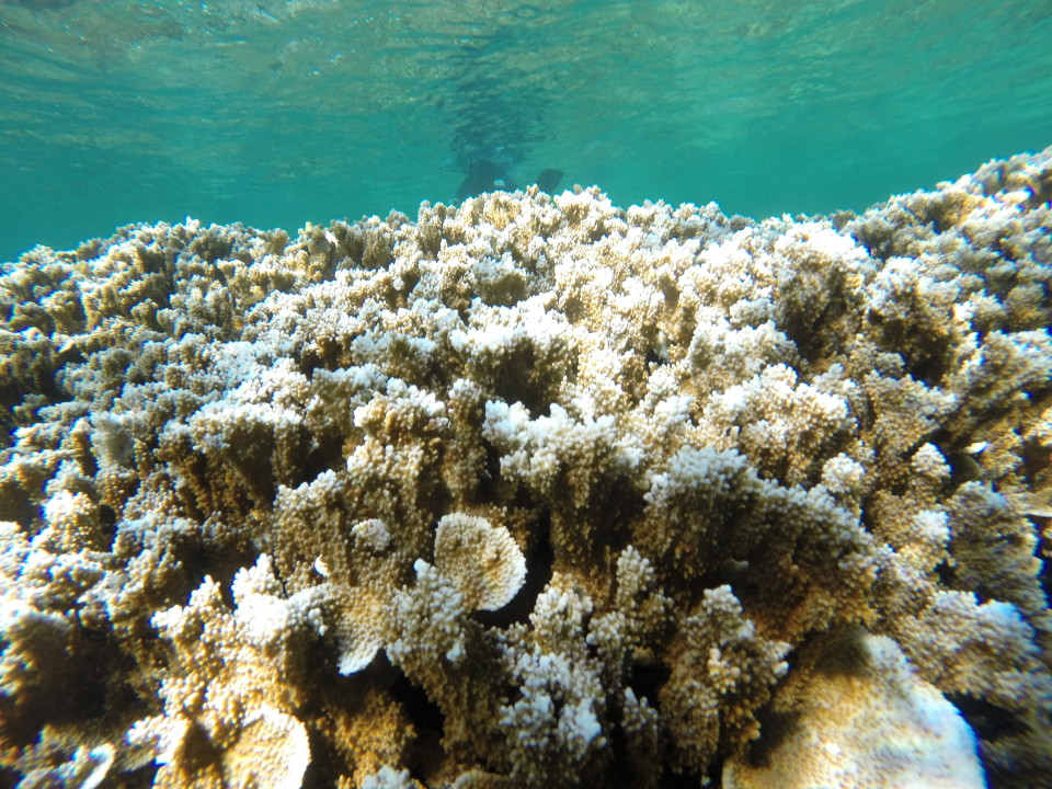 Will Corals Survive The Earth's Third Mass Bleaching Event?