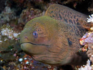 Ouch: An Eel Bite Is 'Like a Knife' Cutting Into You