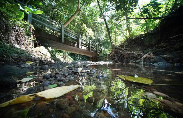 The blockage of greenery in the Palolo Stream, which empties into the Ala Wai, can be a problem.