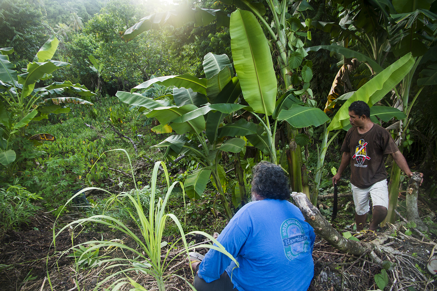 <p>Farming in Lelu. Some islanders see agriculture as helping to boost their economy but experts say it is not enough.</p>