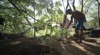 Ben planted papaya near his tent.