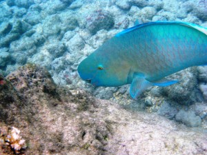 Hawaii Rejects Demand For Aquarium Fishing Moratorium