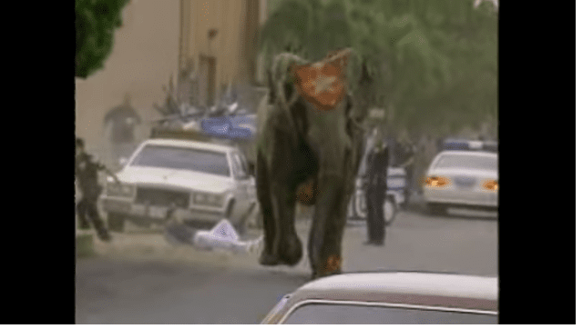 In 1994, Tyke, a 20-year-old circus elephant escaped from the Blaisdell Center after killing her trainer. She was killed by police as she charged down city streets.