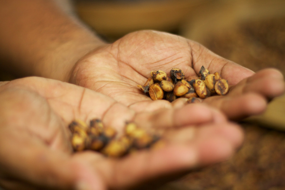 Feds: Big Island Coffee Farmer Paid Migrant Pickers 40 Cents A Pound