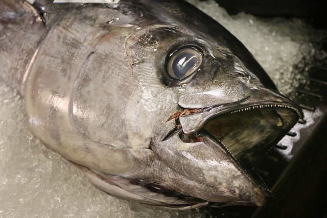 An ahi head at the Honolulu fish auction.