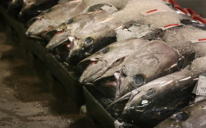 Inquiry, Intervention Needed Now In Fishing Exploitation