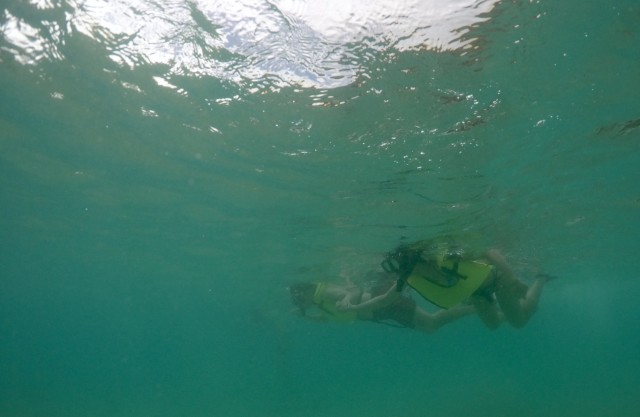 Lifeguards rescued 557 beachgoers at Hanauma Bay in 2014.