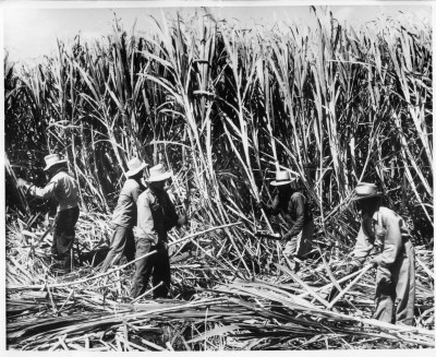 With Our High Cost Of Living, Plantation Days Don't Seem So Long Ago
