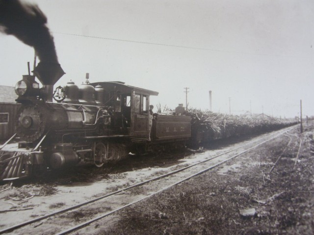 A train drives through a Hawaiian Commercial & Sugar Company field.